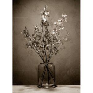 Silver Kush fotografie -Chez Freddy -Kunstwerk_Titus Brein-gallery - galerie - haarlem