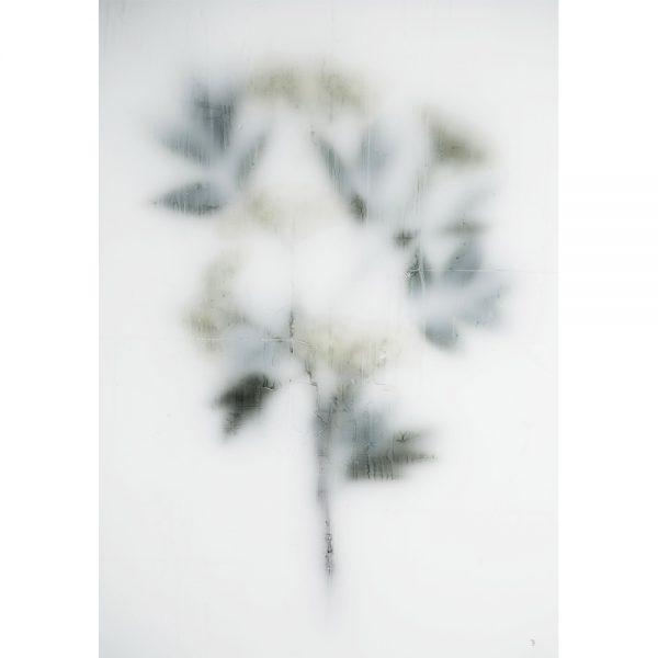 Sambuco- fotografie -Chez Freddy -Kunstwerk_Titus Brein-gallery - galerie - haarlem